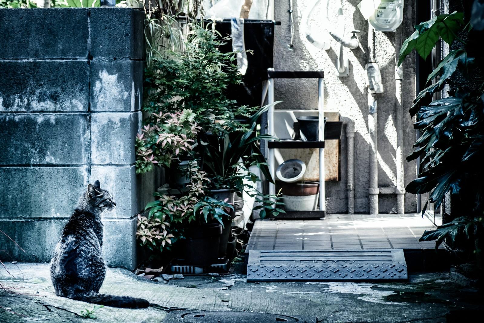 猫と空き家
